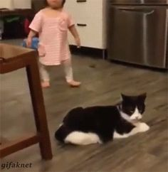 Funny cats - part 231 (40 pics + 10 gifs)