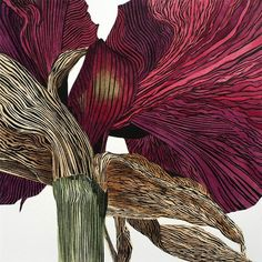 Dark Amaryllis by Irene MacKenzie linocut hand colored