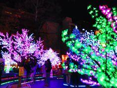 "Osaka ""Amerika-Mura"" Winter illumination 2012.  http://osaka-chushin.jp/  https://www.facebook.com/TheHeartofOsaka"