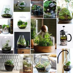 Inspiration and potting tips for low-maintenance, enclosed terrariums from The Sill's blog The Plant Hunter.