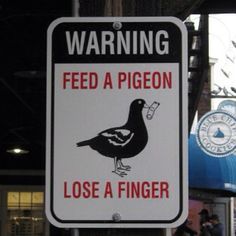 Exactly! And people think birds are harmless!