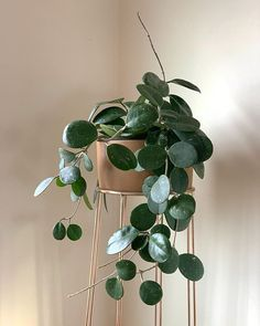 Miss Hoya Obovata takes center stage 🌟🤩🌟 . – Best Garden Plants And Planting Foliage Plants, Potted Plants, Garden Plants, Indoor Plants, Indoor Trees, Indoor Garden, House Plants Decor, Plant Decor, Planting Succulents