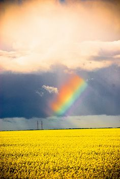 rainbow over canola