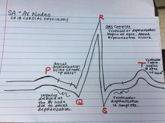 P wave, QRS complex and T wave.  Cardiac physiology