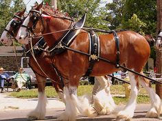 clydesdale horses | ... also really liked the clydesdale horses because they just look so cool