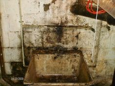 Basement Mold Whatu0027s Lurking Down There? | Comprehensive Mold Management,  LLC. Mold RemovalBasementsManagement
