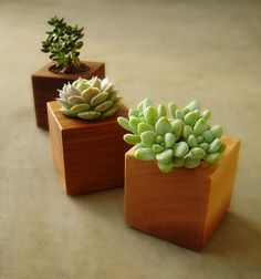 Three Succulent Garden Cube Planters Planters in Reclaimed Wood