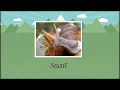 Producers, Consumers, and Decomposers - YouTube