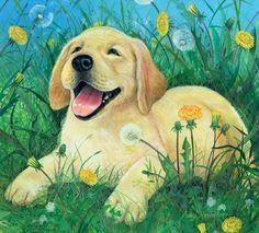 Amy Rosenberg Puppy Labrador