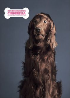 Read more: https://www.luerzersarchive.com/en/magazine/print-detail/cinderella-29582.html Cinderella Campaign for a canine grooming salon. Tags: Lemon Scented Tea, Amsterdam,Cinderella,Ewoudt Boonstra,Peter Verduin