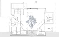 Image result for indoor tree section
