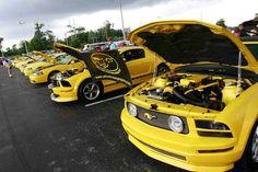 Yellow Mustang registry