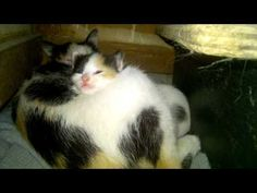 #catsofinstagram cats_of_instagram#cat #cats #kitten #kittens #animals #animal #instaanimal #cute #catlover #catstagram #kittensofinstagram #catoftheday #catlover #catsagram #petstagram #petscorner #instagramcats #instacat #instakitty #pet #pets #weeklyfluff #lovecats #lovekittens #cat #cats #insta_kitten #catsagram #catstagram #instagood #kitten #kitty #kittens #pet #pets #animal #animals #petstagram #petsagram #photooftheday #catsofinstagram #ilovemycat #instagramcats #nature #catoftheday…
