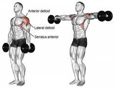 Workout Dumbbell lateral raise exercise illustration - Use the dumbbell lateral raise to strengthen and build your anterior and lateral deltoids, which will give you broad shoulders. Gym Workout Tips, Dumbbell Workout, Fun Workouts, Fitness Workouts, Training Workouts, Fitness Weightloss, Sport Fitness, Muscle Fitness, Health Fitness