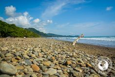 Dominical Costa Rica - #crsurf #crsurfreports