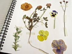 Emily Dickinson's Herbarium Deco Originale, Decoration, Flowers, Plants, How To Make, Painting, Hui, Yandex, Bullet