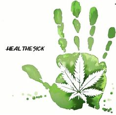 Our Stellar Canna CBD Oil, Siempre Vida CBD bar soaps along with our cannabidiol pet products have been helping many issues. Cannabis Cures Cancer, Cbd Hemp Oil, Cancer Cure, Herbalism, The Cure, Plant Leaves, Plants, Crohns, Herbs