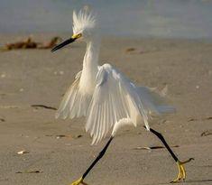 Bird walking On  The Beach Like a Model