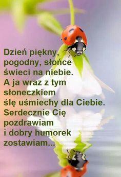 Nick Vujicic, Beautiful Gif, Good Morning, Motto, Humor, Funny, Esl, Fotografia, Polish Sayings