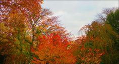 Herbstimpression - Jahreszeiten - Galerie - Community
