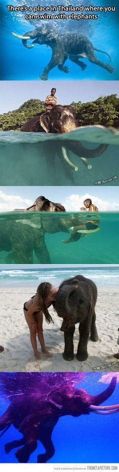 In Thailand there is a place that you can swim with elephants! Bucket list! GOING THERE FOR SURE!! A MUST!