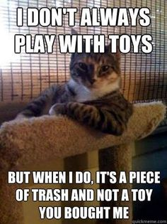 My Cats Do This Lol