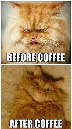 Coffee Lovers know this is about right. Good morning Coffee Lover… Coffee Lovers know this is about right. The post Coffee Lovers know this is about right. Good morning Coffee Lover… appeared first on Fab. Happy Coffee, Good Morning Coffee, Coffee Is Life, I Love Coffee, My Coffee, Coffee Lovers, Coffee Time, Funny Coffee, Coffee Cat