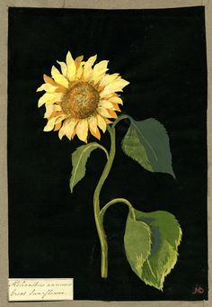 Paper sunflower made by Mrs Mary Delaney