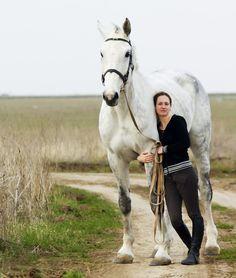 Голштинские лошадки (фото) - Наши любимые лошади!