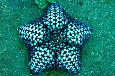 Starfish .... with a beautiful design