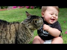 Funny cats annoying babies - Cute cat & baby compilation - http://funnypetvideos.net/funny-cats-annoying-babies-cute-cat-baby-compilation/