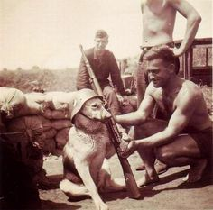 A dog being posed by a German soldier
