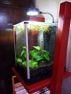 advices for a hanging light stand aquarium lighting pinterest hanging lights aquariums. Black Bedroom Furniture Sets. Home Design Ideas