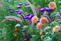 This desirable and long-lasting summer border is fairly easy to replicate in order to be enjoyed at home. If kept regularly dead-headed, this striking plant combination should last until frost! Pennisetum Setaceum, Fountain Grass, Flower Garden Design, Mediterranean Garden, Hydroponic Gardening, Organic Gardening, Garden Borders, Annual Plants, Colorful Garden