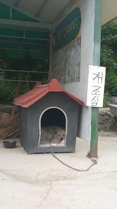 와우정사에 사는 개