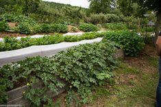 În vizită la Bec Hellouin (Franţa) - una dintre cele mai renumite ferme ecologice şi de permacultură din lume - gardenbio.ro Mai, Plants, Plant, Planets