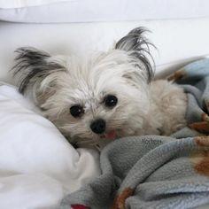 Adorable puppy - Norbert