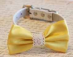 Yellow Wedding dog Collar, Yellow wedding accessory, Collar of 2015, Dog Bow tie, Dog lovers, Country wedding, Beach wedding