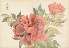 Original Tanigami Konan Japanese Woodblock Peony Series from the Teiten (Imperial Exhibition) Rare, first edition, circa 1917 . Peony Painting, Silk Painting, Flower Prints, Flower Art, Illustration Blume, Peony Print, Wedding Prints, Water Art, Japanese Flowers