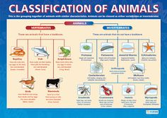This is Nadin's page: science - classification of animals