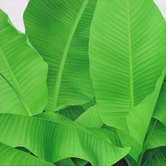 Oil Painting Tropical Leaves Green Sunshine Life ba023