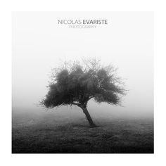 Lonely tree by Nicolas Evariste