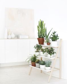 potted plants on a ladder shelf