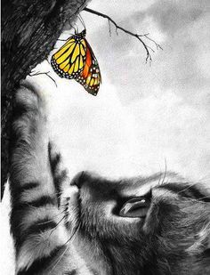 Cat and Monarch ❤