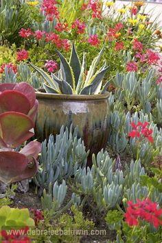 Companion plants for succulents from Deborah Baldwin