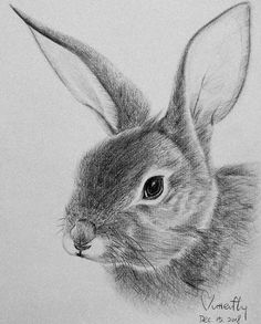 so happy that I have chance to practice the pencil drawing for rabbit Bunny Sketches, Animal Sketches, Art Drawings Sketches, Cute Drawings, Pencil Drawings Of Animals, Rabbit Drawing, Rabbit Art, Easter Paintings, Bunny Art