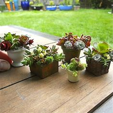 Succulents Require Low Water, Great for Earth Day --> http://www.hgtvgardens.com/photos/flowering-plants-photos/grow-low-water-succulents-for-earth-day?soc=pinterest