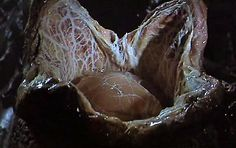 What is known about the facehugger form of the xenomorphs in Alien movies and comics. Alien 1979, Alien Vs, Scary Characters, Predator 1, Egg Photo, Aliens Movie, Xenomorph, Creepy Art, Mythical Creatures