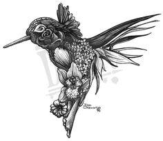 hummingbird drawings | Hummingbird | DS Art