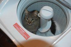 Dominam a tecnologia das lavadoras de roupas...